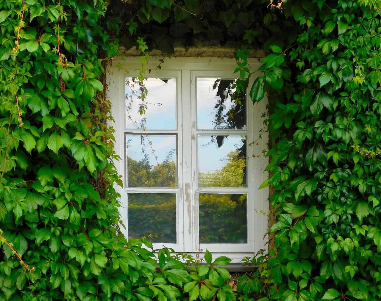 ¿Qué son las plantas trepadoras?