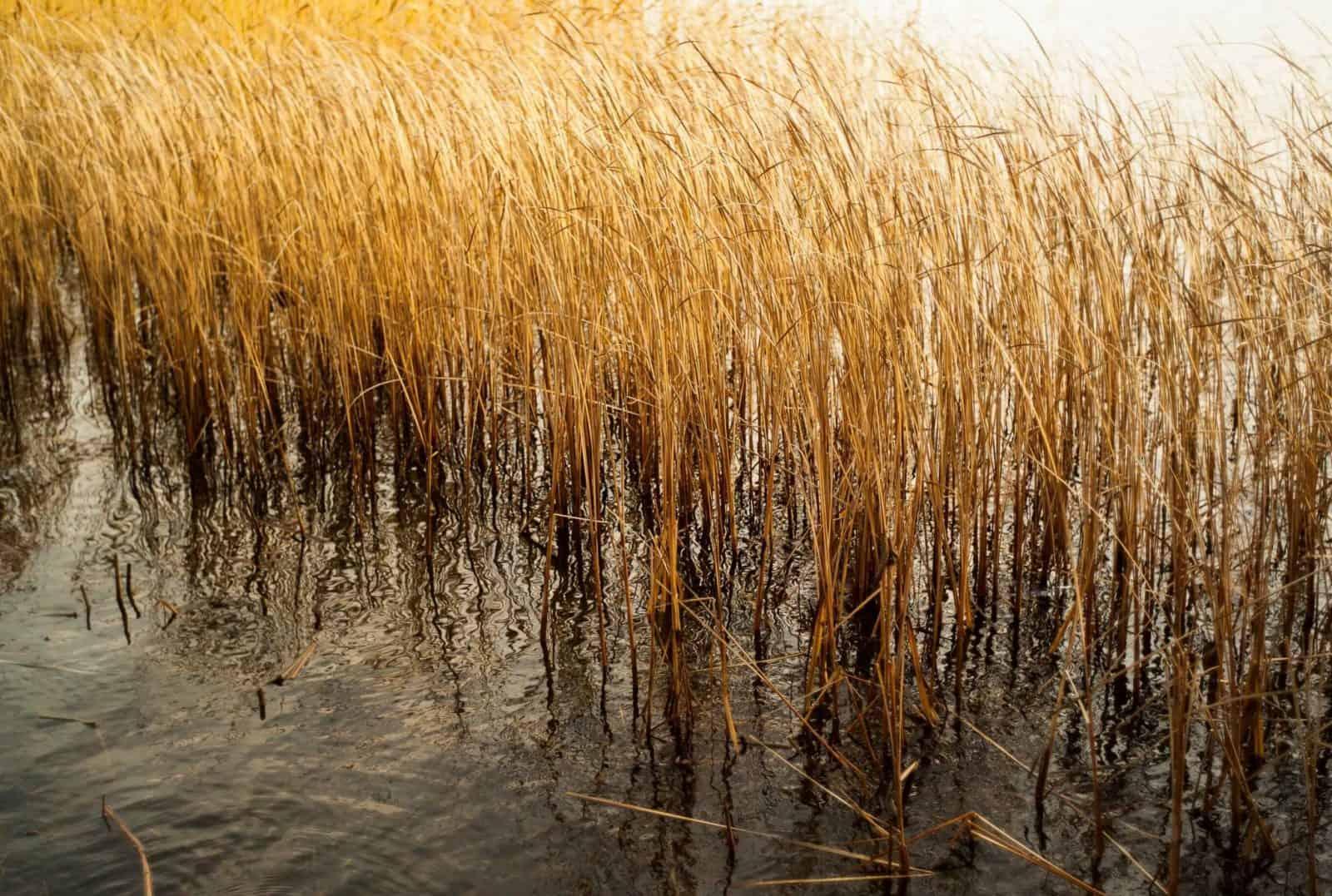 qué necesitamos para sembrar arroz