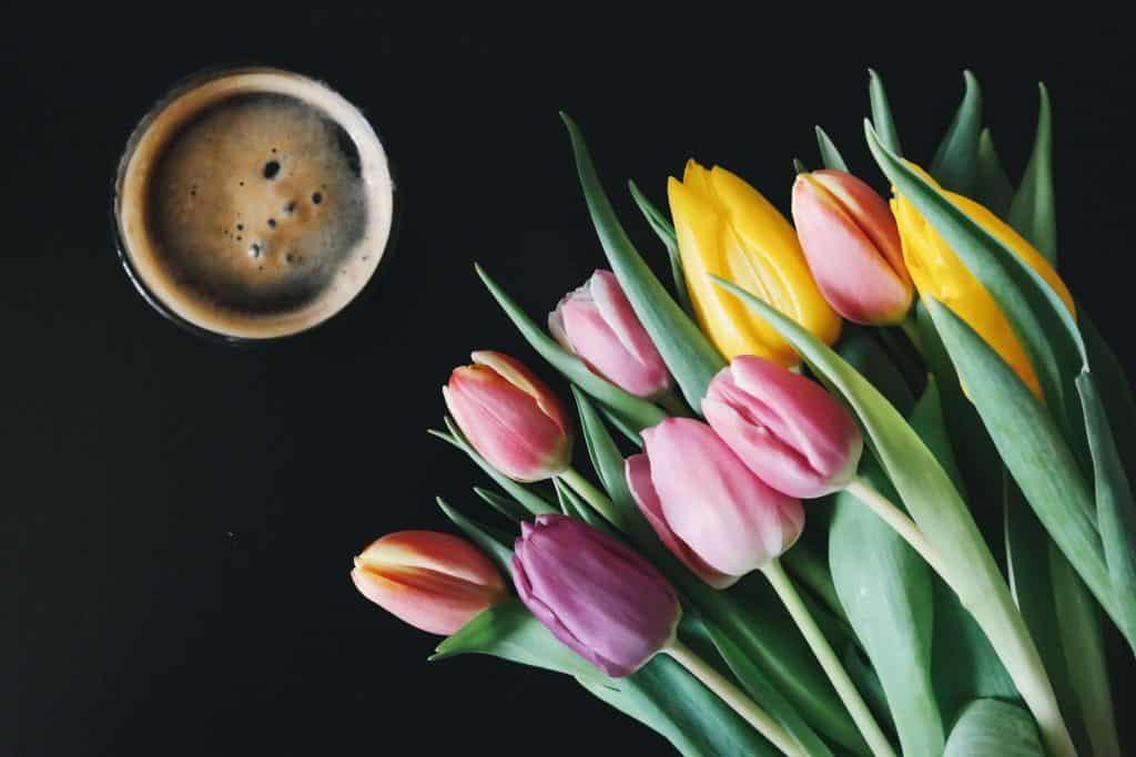 qué necesitamos para sembrar tulipanes
