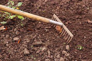 Desinfectar las herramientas para Antracnosis