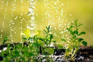 Formas de regar las plantas de interior