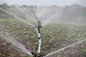 riego en agricultura