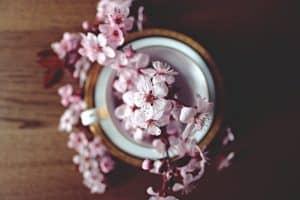 Flores Híbridas la Rosa del té