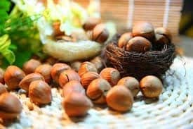 sembrar árbol de macadamia