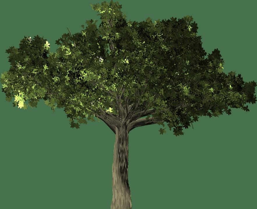sembrar árbol de ficus