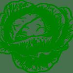 Sembrar Coliflor: [12 Pasos] + Guía Completa