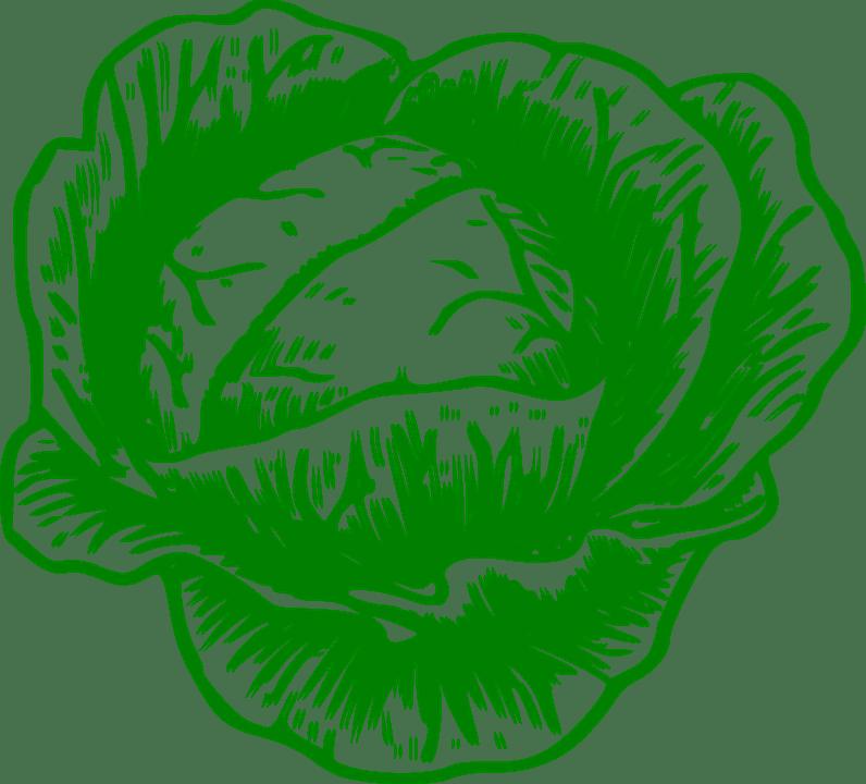sembrar coliflor 4