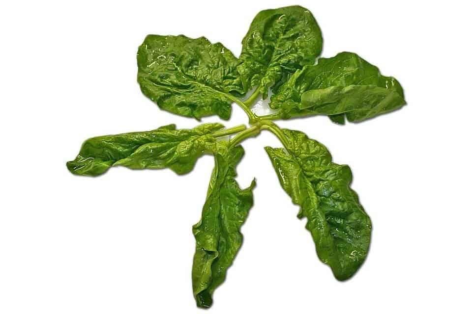 sembrar espinacas 1