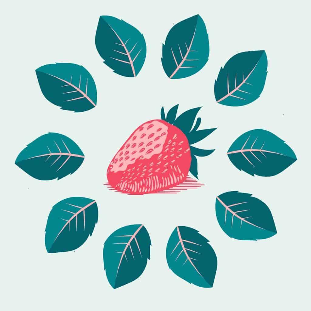 sembrar fresas 2