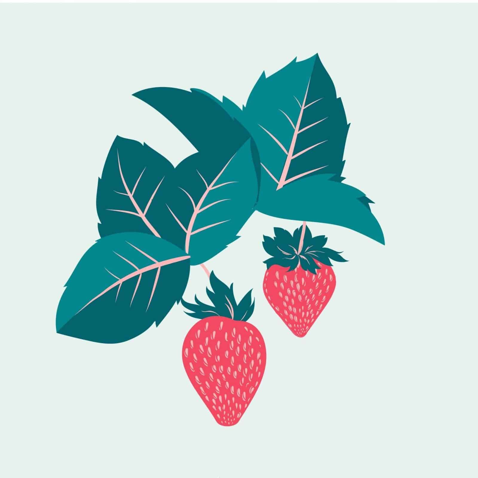 sembrar fresas 4