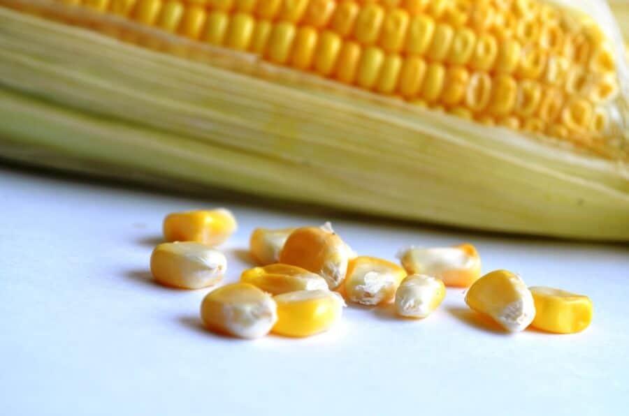 sembrar maíz 1