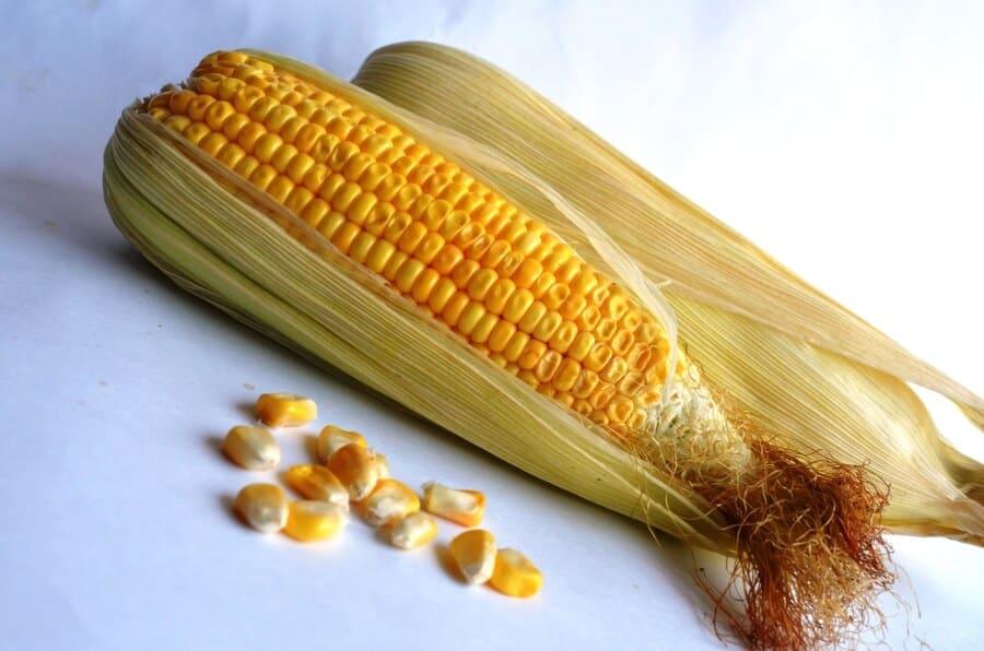sembrar maíz 11