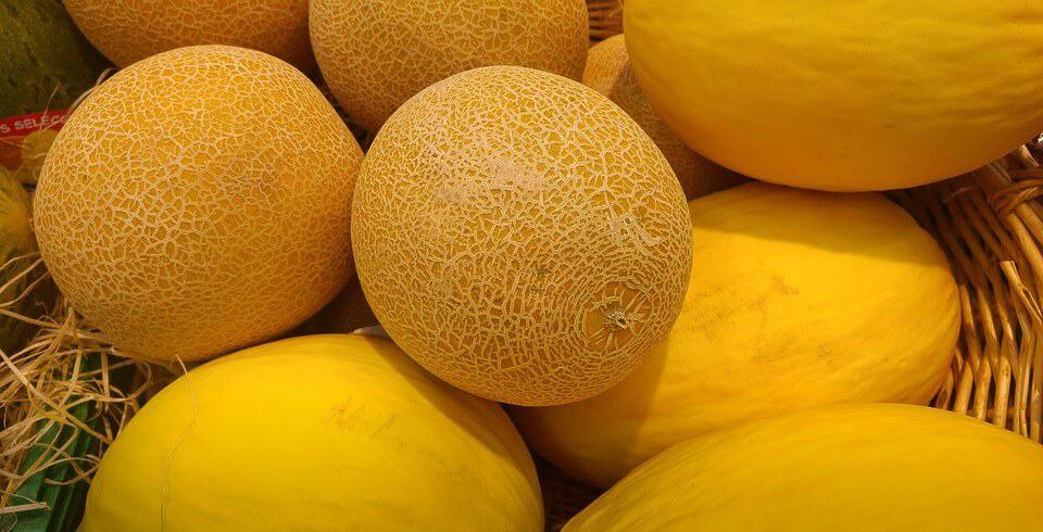 sembrar melones 3