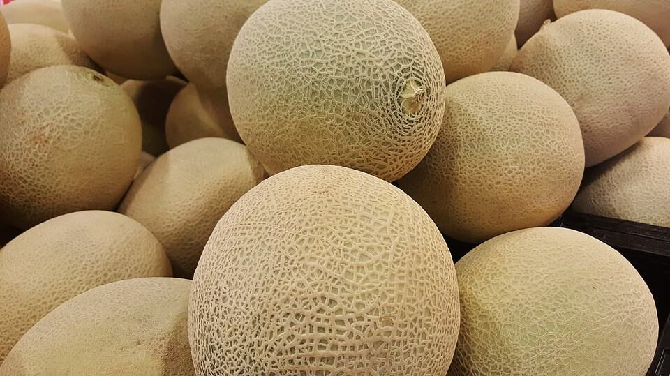 sembrar melones 5