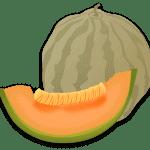 Sembrar Melones nunca fue tan fácil si sigues estos [12 Sencillos Pasos]