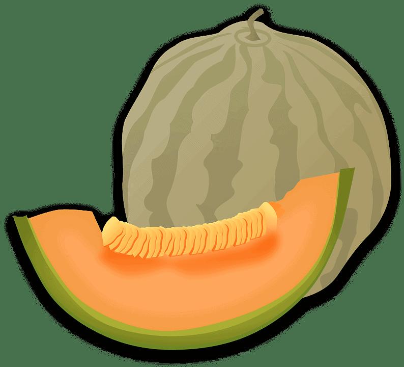 sembrar melones 9