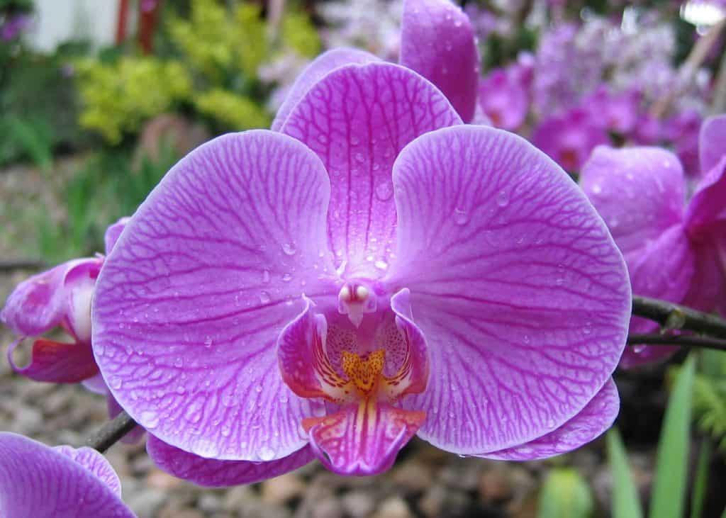 sembrar orquídeas 2