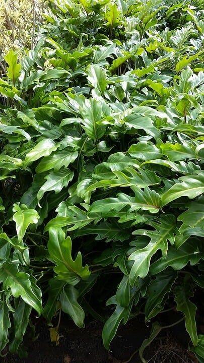 sembrar plantas de interior