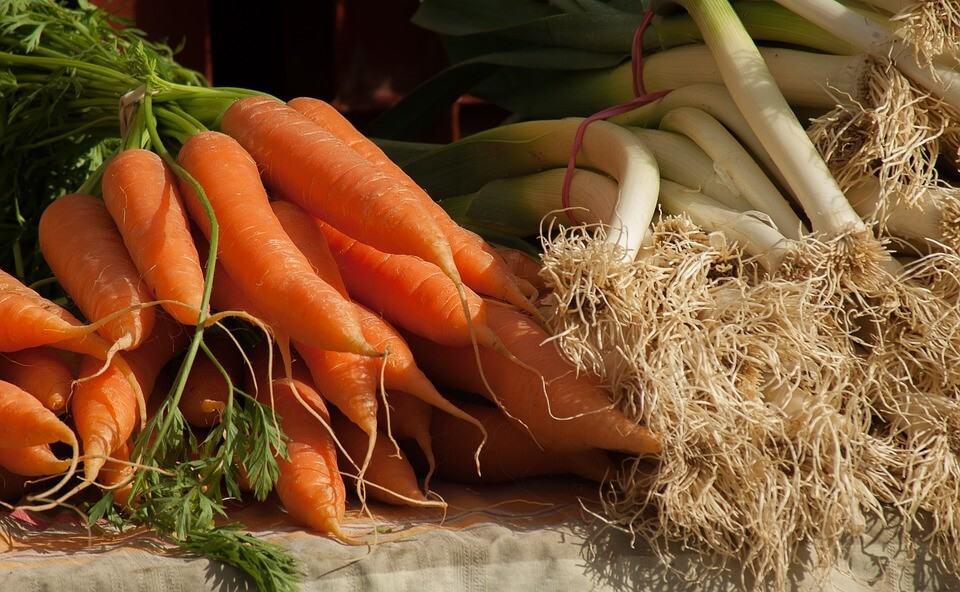 sembrar puerros y zanahorias