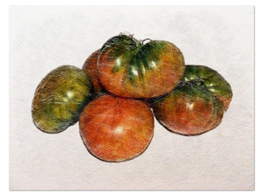 sembrar tomates paso a paso