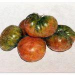 [13 Pasos] para Sembrar Tomates: Todo lo que Necesitas Saber
