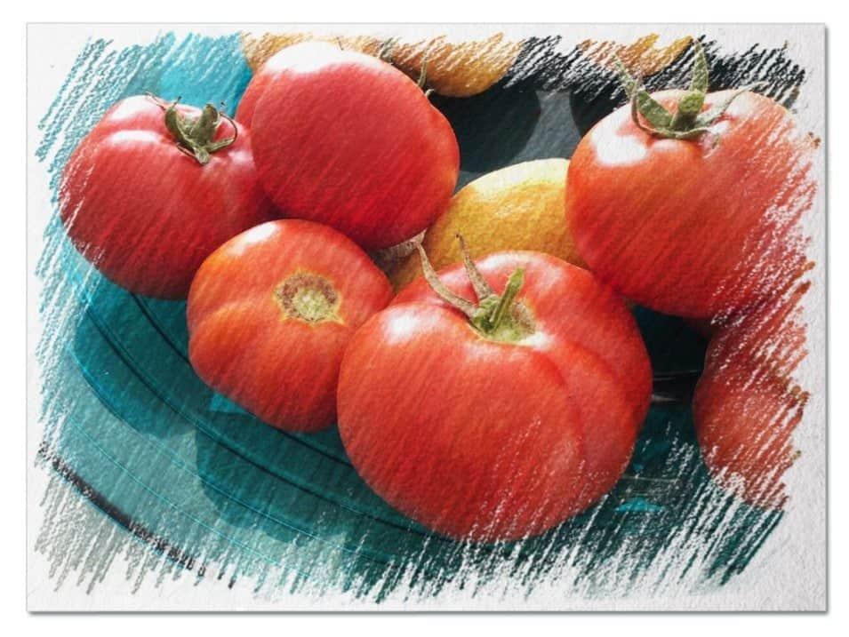 sembrar tomates paso a paso2