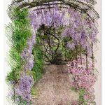 Cómo Sembrar Wisteria o Glicinia en tu Jardín: [Guía Completa]