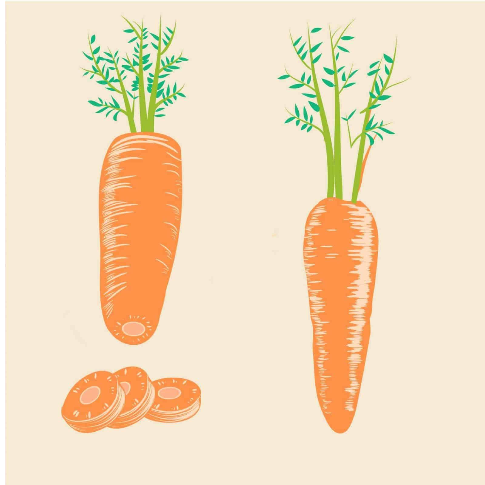 sembrar zanahorias 3