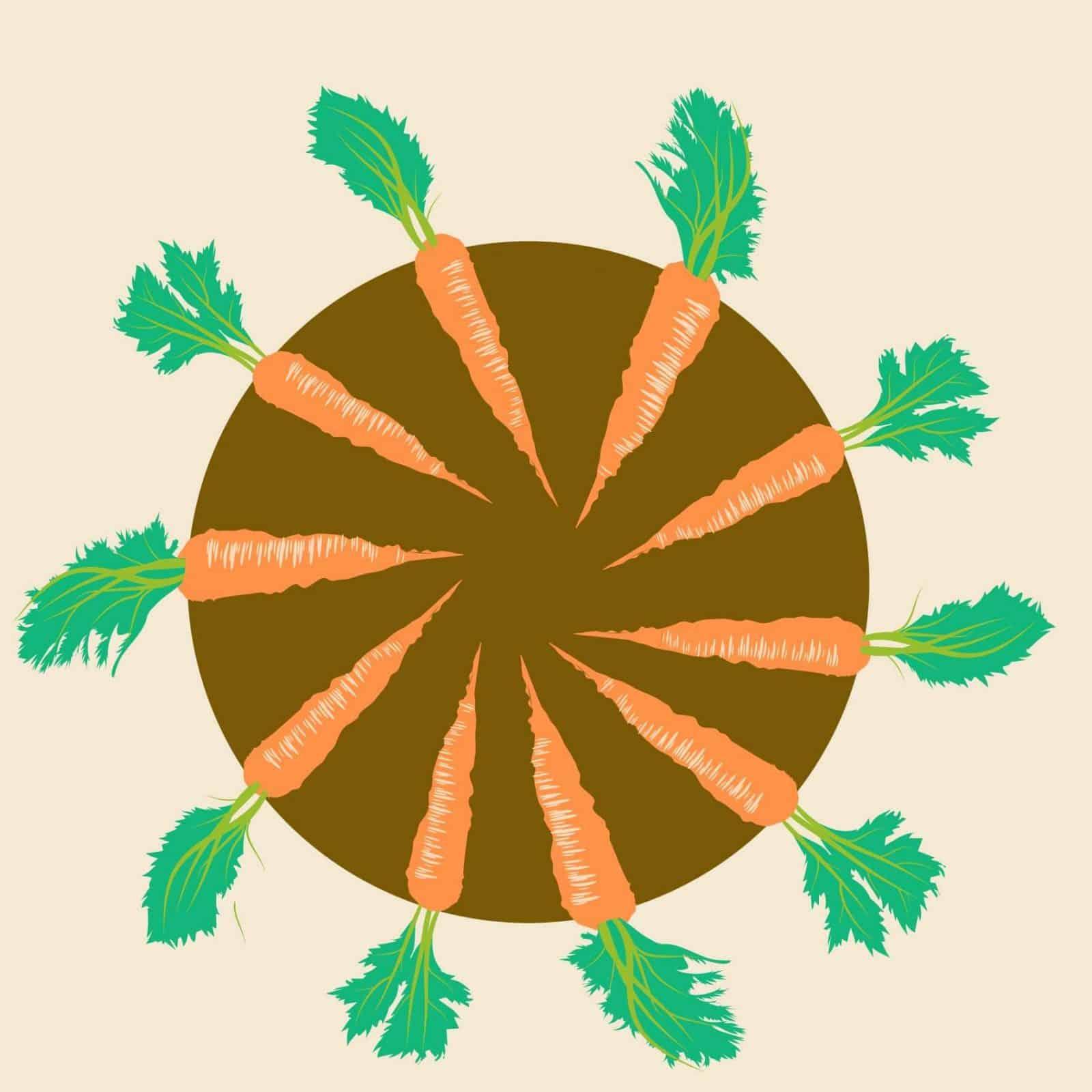 sembrar zanahorias 5
