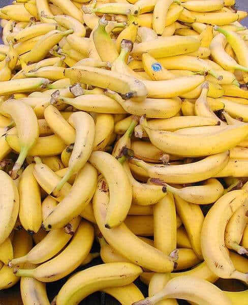siembra del plátano
