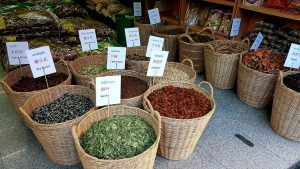 ¿Dónde debemos sembrar la stevia?