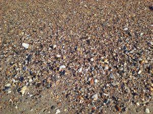 textura del suelo pedregoso
