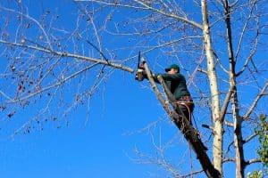 Cómo cortar un árbol
