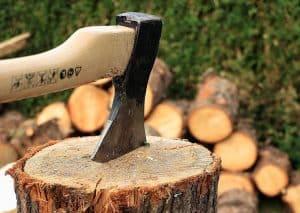¿Qué debemos tener en cuenta antes de talar un árbol?