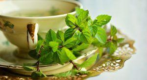 Cómo cultivar la planta del té verde