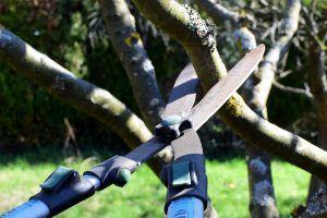 Qué son las tijeras para podar árboles
