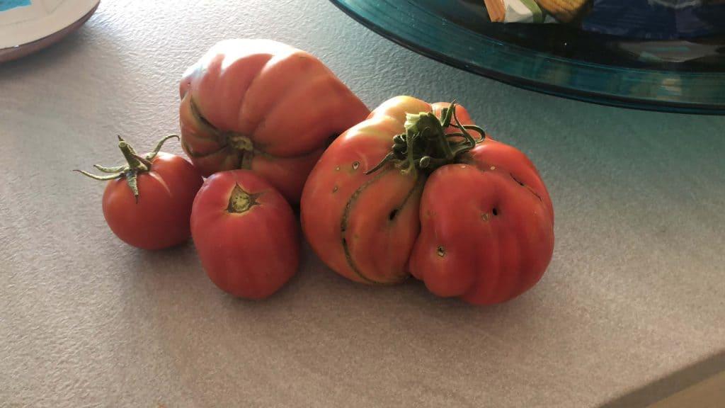 tipos de tomates corazón
