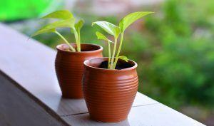 Cómo trasplantar plantas de interior