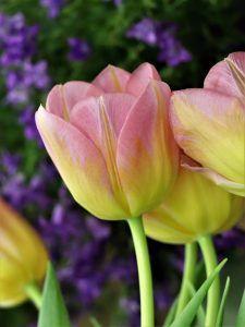 Qué flora predomina en el clima de Europa
