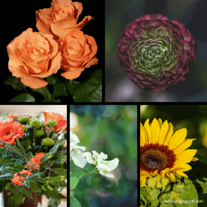 Las 25 Flores Silvestres más Comunes, Bonitas y Fáciles de Cultivar