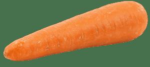 el cultivo de la zanahoria