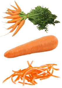 cuándo sembrar zanahorias