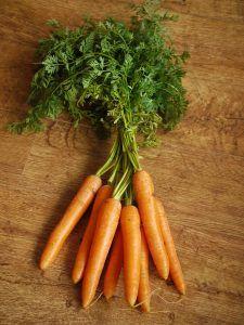 Plagas y enfermedades de la zanahoria - Quemadura de las hojas