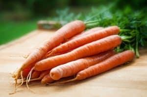 Variedades de zanahorias - Zanahorias Nantes