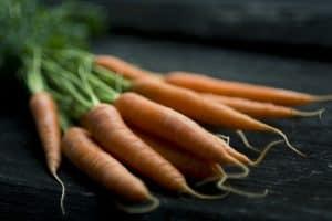 Variedades de zanahorias - Zanahorias Chantenay