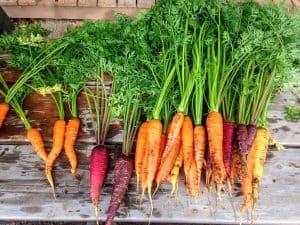 Zanahorias Flakee